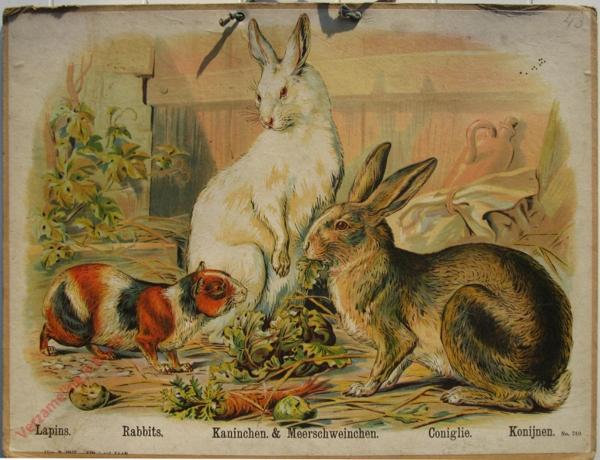740 - Lapins, Rabbits, Kaninchen & Meerschweinchen, Coniglie, Konijnen